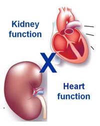 heart-kidney_02